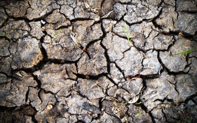 What If The Worlds Soil Runs Out?