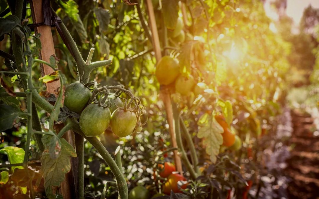 Organic: A Bright Spot for Farms, Food and the Future